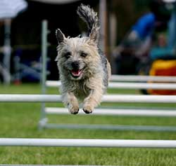 Agility class</br>on Sat 19 January 2019</br>Starts at 09:00