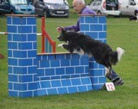 Agility class</br>on Sat 25 January 2020</br>Starts at 09:30
