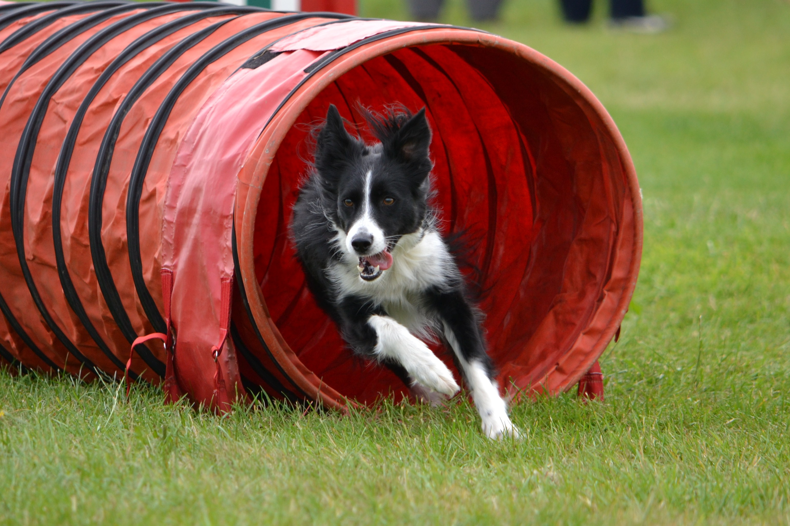 Fun agility class</br>on Sat 24 August 2019</br>Starts at 10:00