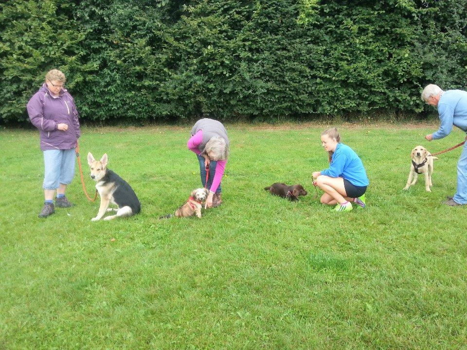 Puppy Class (week 1 of 7)</br>on Sat 24 February 2018</br>Starts at 12:00