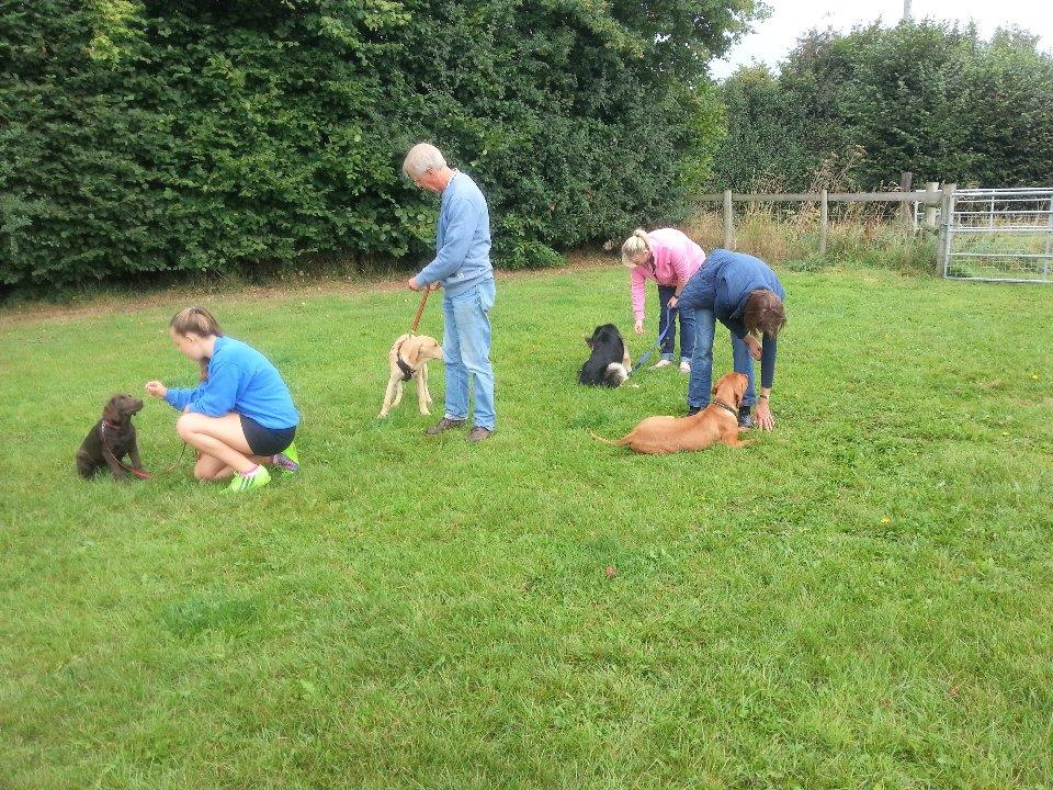 Puppy Class (week 6 of 7)</br>on Sat 29 July 2017</br>Starts at 09:00